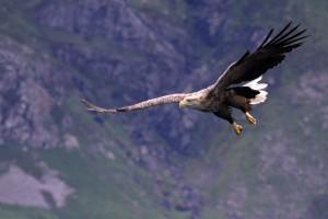 Sea Eagle 3